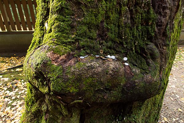 石上神宮木と賽銭