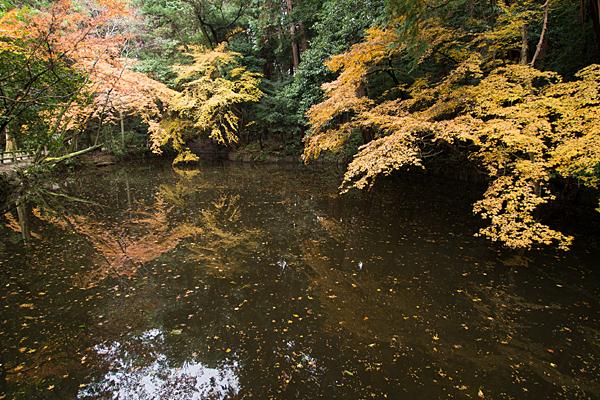 石上神宮池と紅葉モミジ