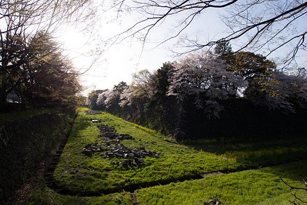名古屋城堀桜の頃