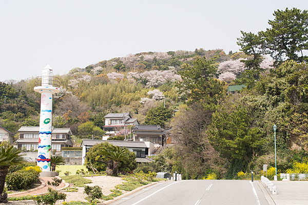 吉良の山と桜