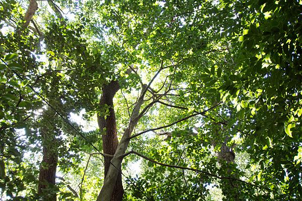 星宮社本地祭り境内の木々