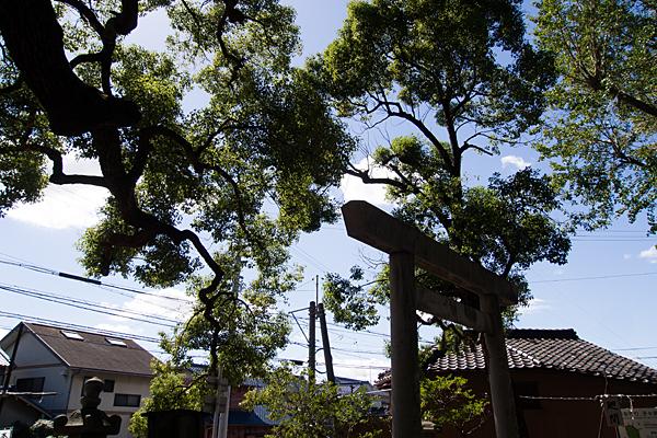 星宮社本地祭り鳥居と木々