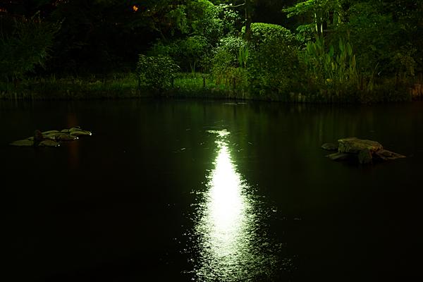 夜の熱田神宮池