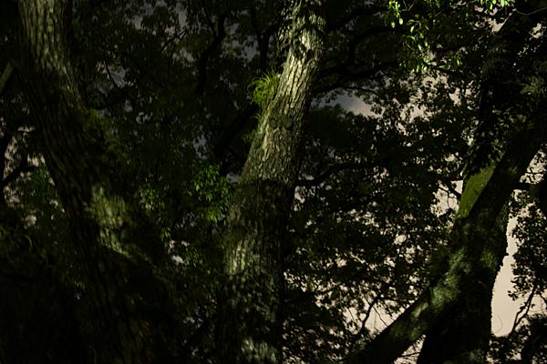 夜の熱田神宮の杜