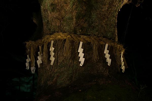 夜の熱田神宮御神木と注連縄