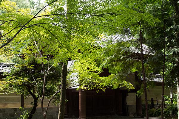 妙興寺勅使門裏とモミジ
