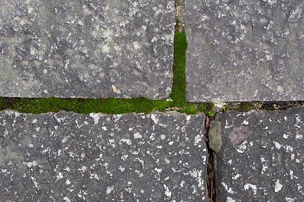 妙興寺石畳と苔