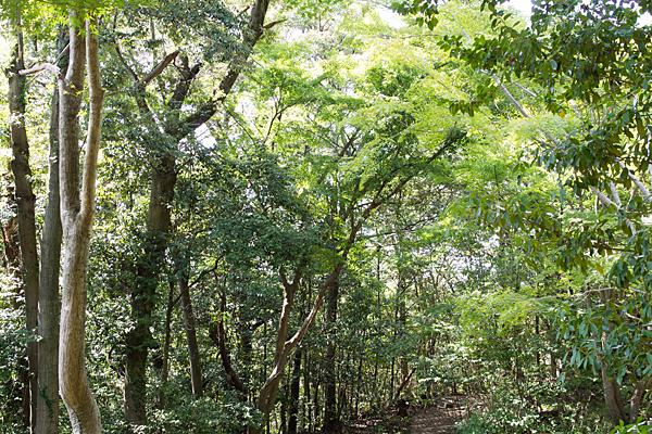 犬山寂光院森林と光