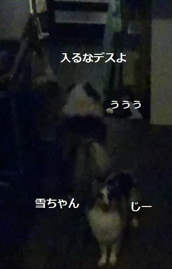 MOV_2334_000000.jpg