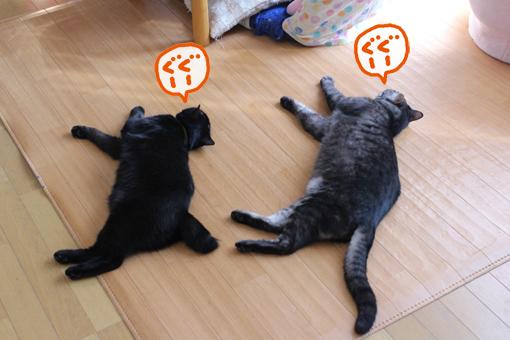 シンクロナイズド睡眠ing。