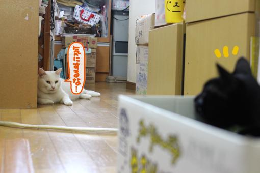 猫はネズミを捕まえるもの、ネズミは猫から逃げるもの。