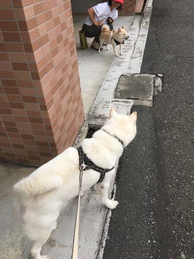 台風一過の散歩-3