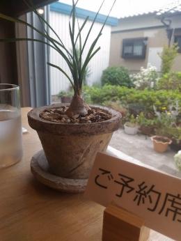 InamiKotori_001_org.jpg