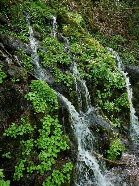 山から吹き出す水
