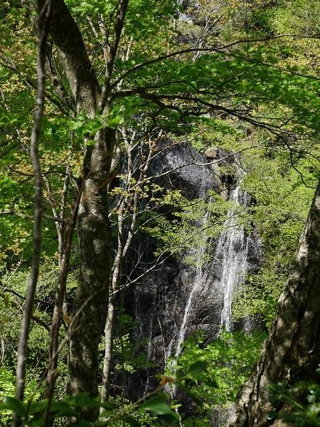 向いの山の滝