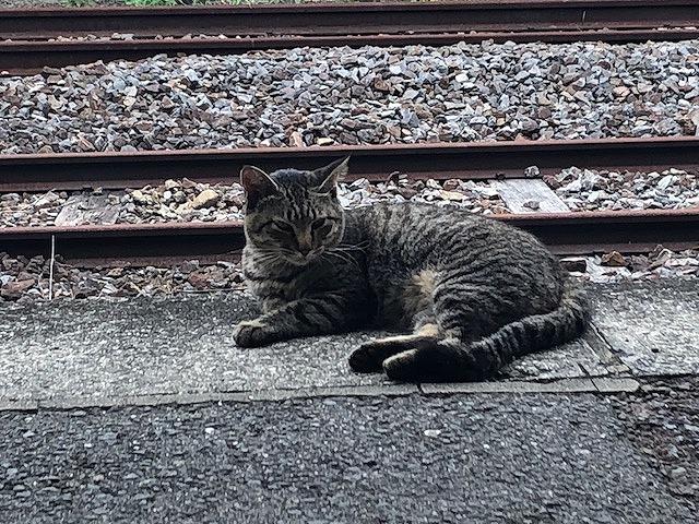 長崎駅ねこ