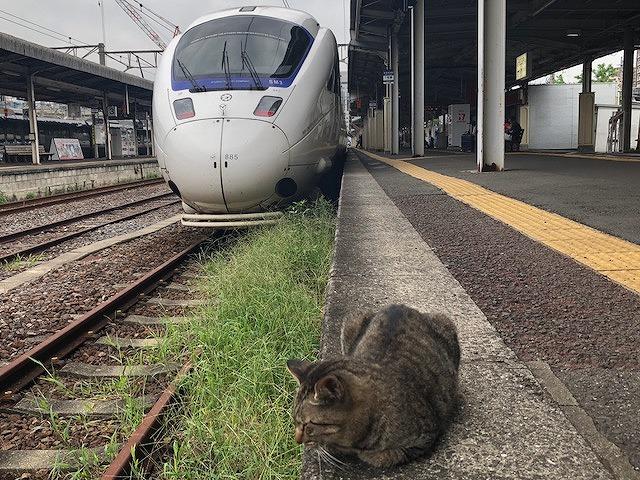 列車と長崎駅ねこ