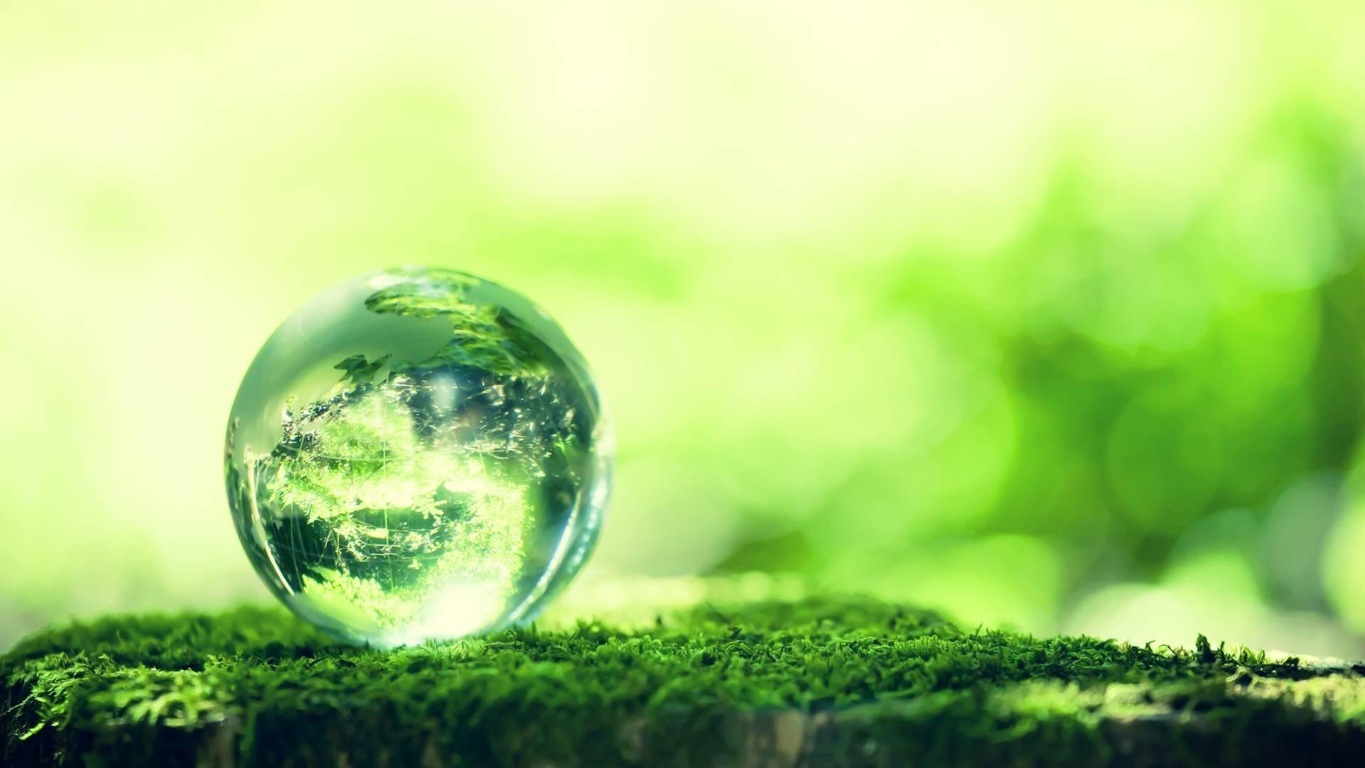 ユクスキュルの「マダニの環世界」は、聖徳太子の「仏教」を理解する第一歩です