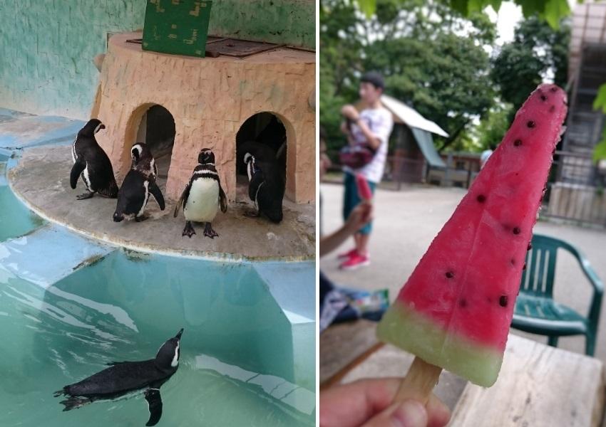 180811遊亀公園動物園2