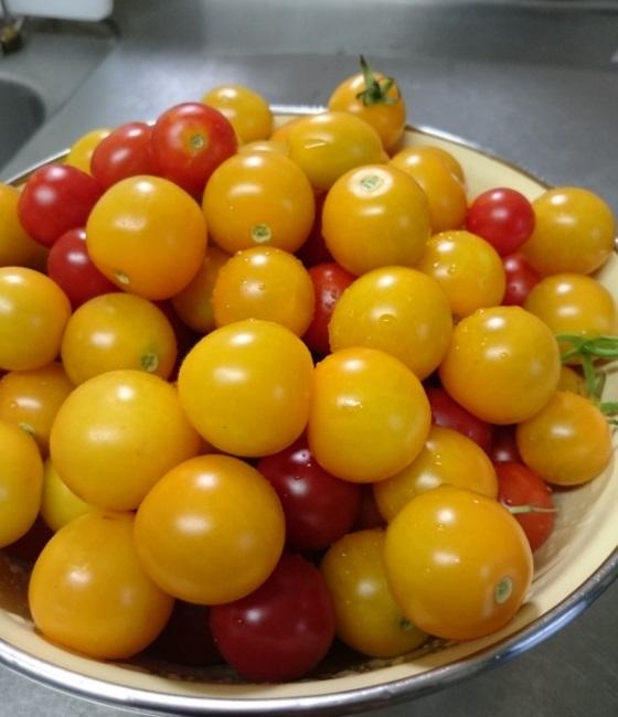 180825収穫