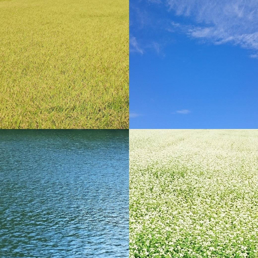 180917今日の色