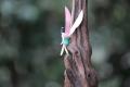 妖精の森62上アップ04