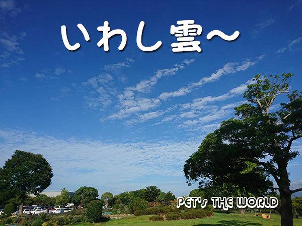 2018-09-05-01.jpg