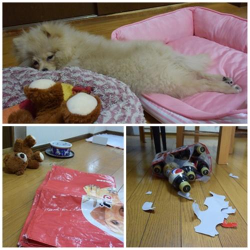 cats2_20180929171435eb9.jpg