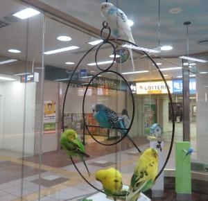 1010小鳥の広場2