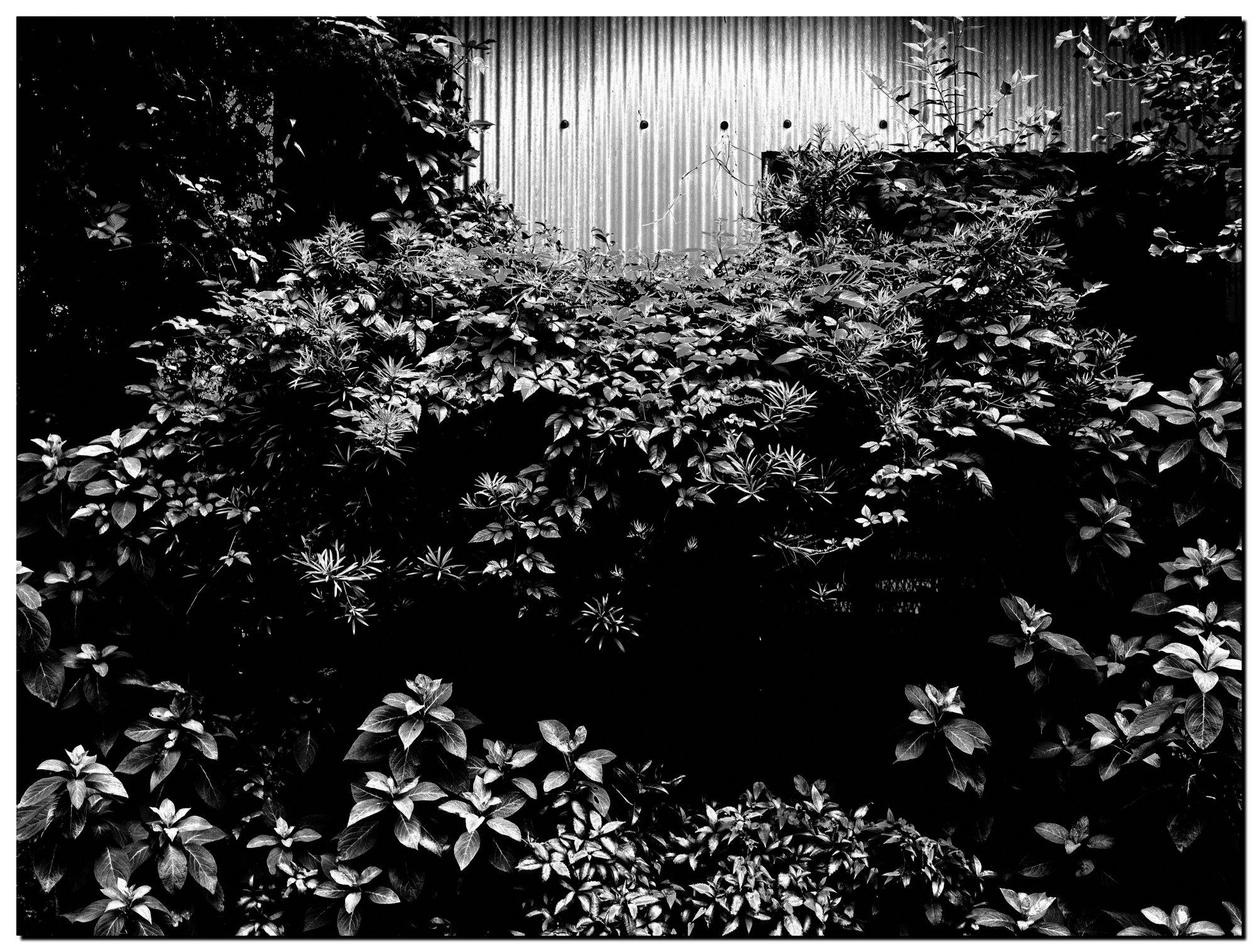 LR6-DP2Q0287-Edit-3-1.jpg