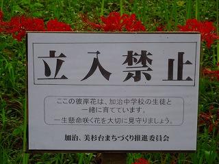DSC0001920180919.jpg