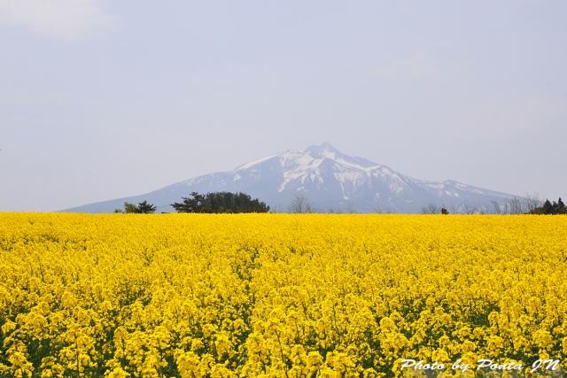 nanohana1805-015.jpg