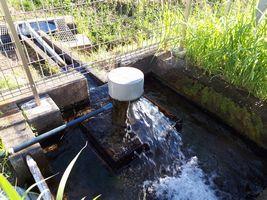 【写真】田んぼの脇にある自噴する井戸水