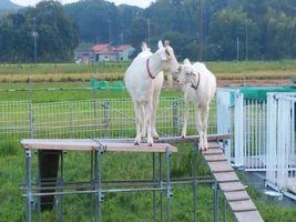 【写真】登り台の上で仲良く顔を見合わせているアランとポール