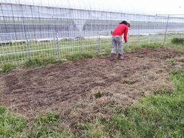 【写真】アランフィールドの一角につくった畑にイタリアンライグラスの種を播いているところ