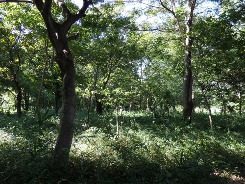 山崎山雑木林