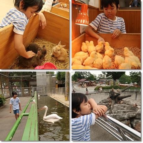 tobu zoo -4