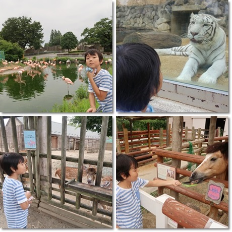tobu zoo -3