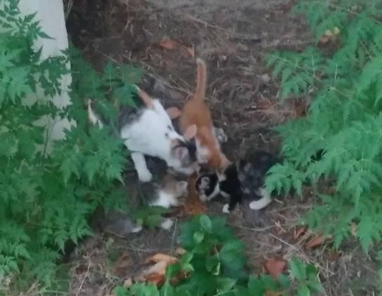 アグネス家の近くの子猫たち