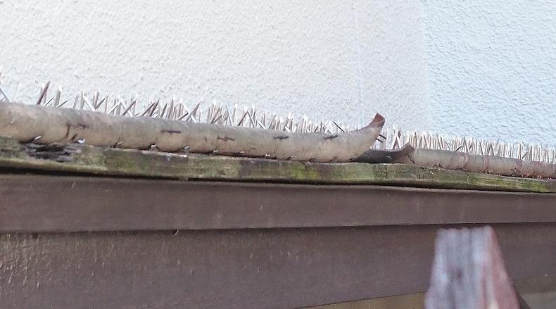 猫のバラバラ死体が置かれていた現場近くには、おびただしい数の釘が天に向かって打ち付けられていました。1