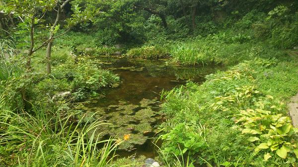 テラスの池