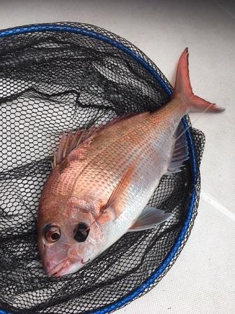 タイラバ真鯛
