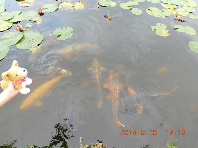 DSCN0998砂川 (4)