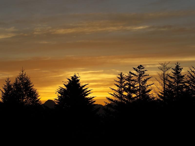 森の夜明け