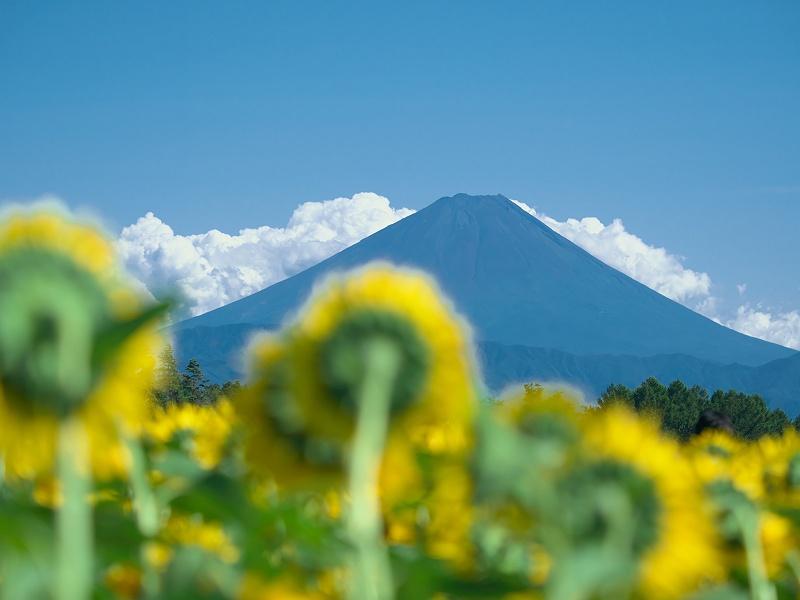 富士を見つめて