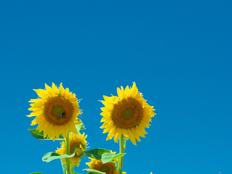 夏 満開!