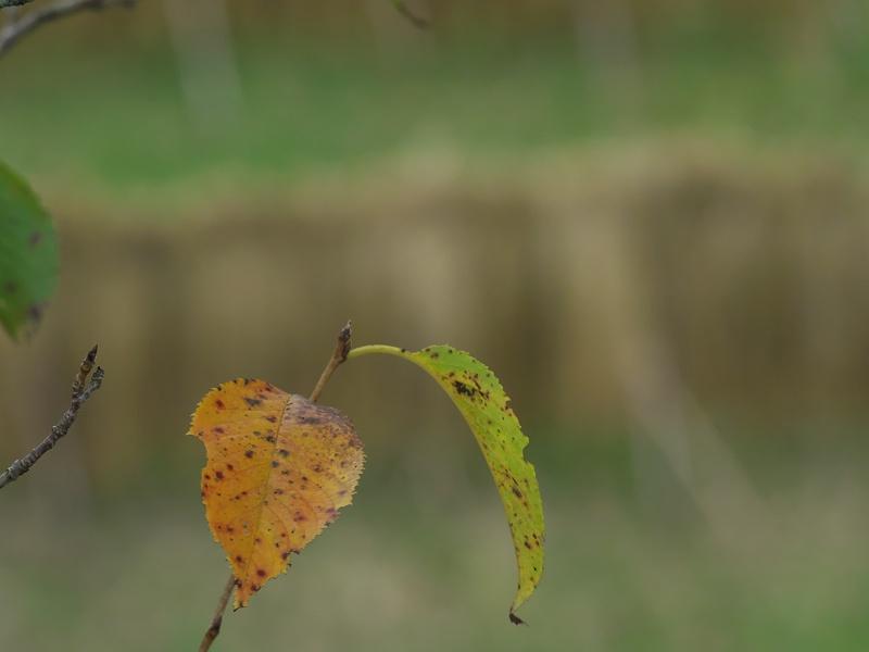 実りの秋へ