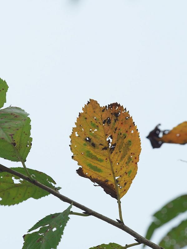 実りの秋へ 2