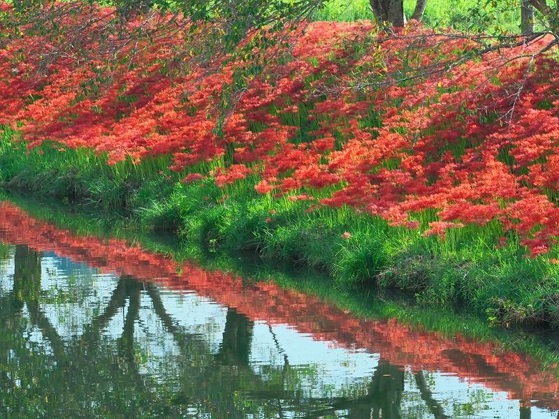 初秋の水辺