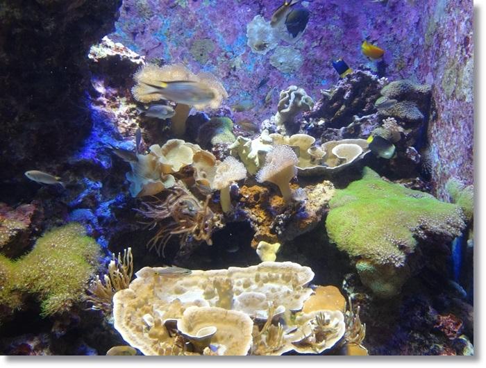美ら海DSC01892